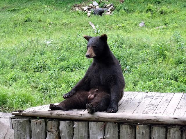 park omega cinnamon bear