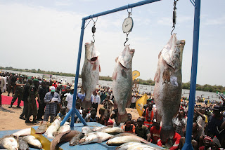 Argungu International Fishing Festival
