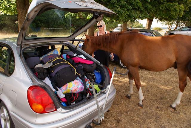 Nyfiken häst på Haväng