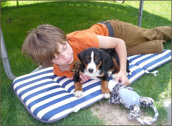 Bo - Appenzeller - Sennenhund
