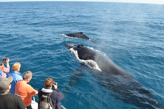 The Advantages of Whale Watching to Local Communities | Beauty, fashion and everything in between!