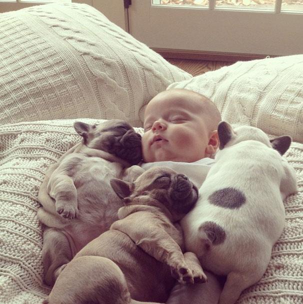 μωρό κουτάβια