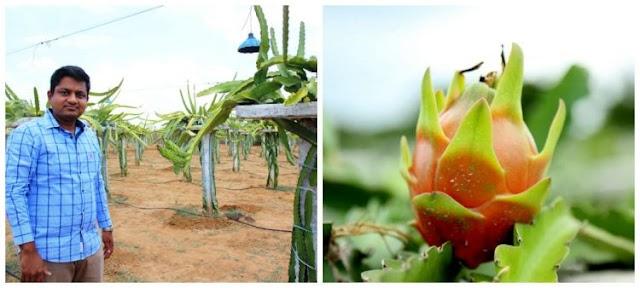 Hyderabadi Doctor goes global for dragon fruit