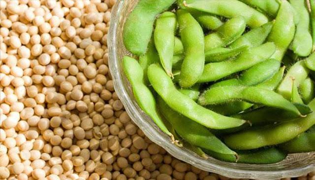 Cách trồng đậu nành & Kỹ thuật trồng cây đậu nành