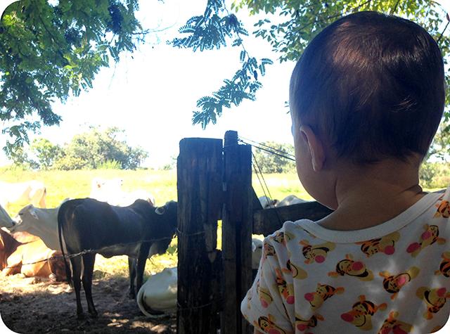 Bebê Fazenda