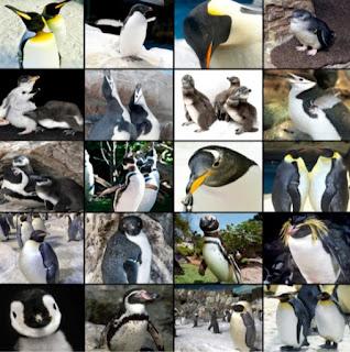 manual-cuidados-pinguinos-pinguins-baixar-descarregar-download-pdf