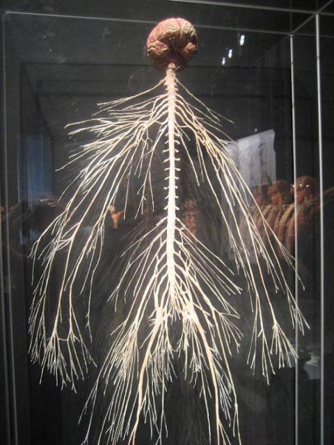 الجهاز-العصبي-بكامل-عظمته