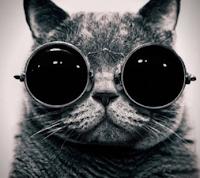 юмор про кошек