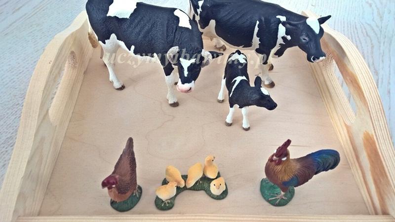 Krowa - byk - cielak - Montessori