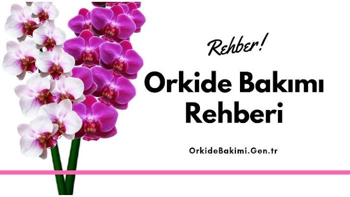 Orkide Bakımı Rehberi