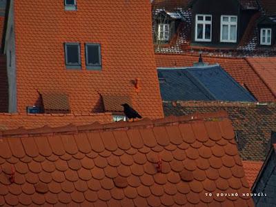 Πουλί σε στέγη με κεραμίδια στο Μπάμπεργκ της Βαυαρίας / Bird on a rooftop in Bamberg, Bavaria
