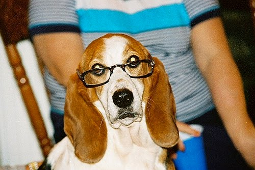 20 Cute dogs with glasses | Amazing Creatures
