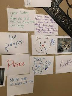 """Una niña hizo un """"muro del sufrimiento"""" para que sus padres la dejaran adoptar un gatito"""