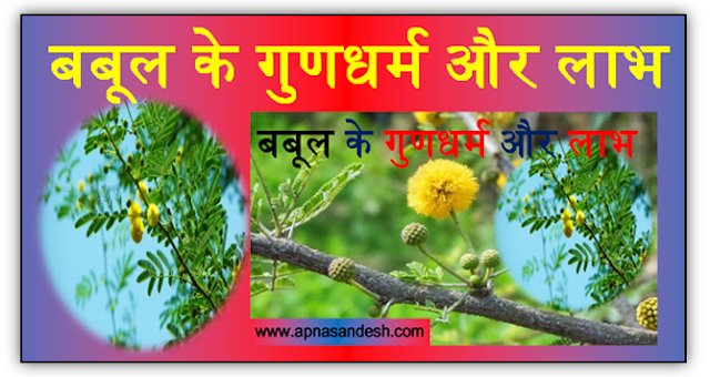 बबूल के गुणधर्म और लाभ - Properties & Benefits of Acacia
