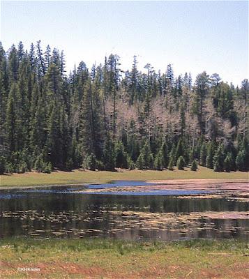 Fir Forest, Kaibab Plateau