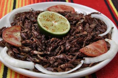 platillo tipico de mexico,territorio mexicano,comida mexicana