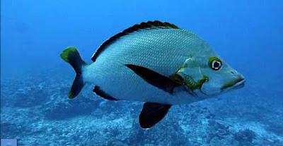 Giải mã giấc mơ lô đề khi thấy cá