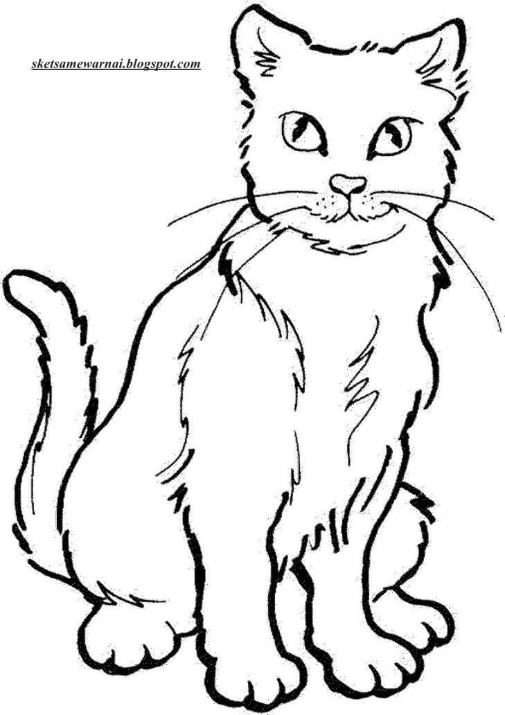 Sketsa Mewarnai Gambar Hewan Kucing