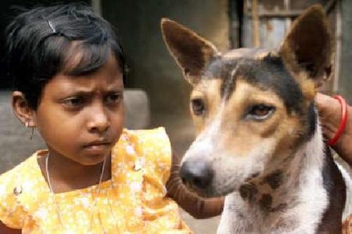 adat menikahi hewan di india