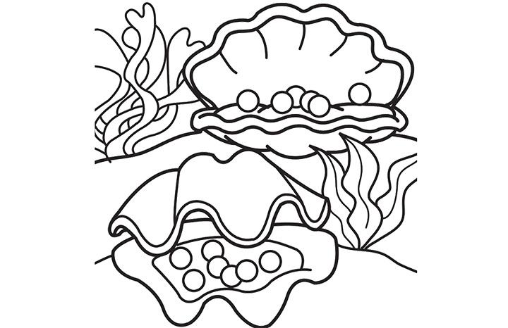 Los dibujos para colorear : Dibujos de conchas de mar para colorear