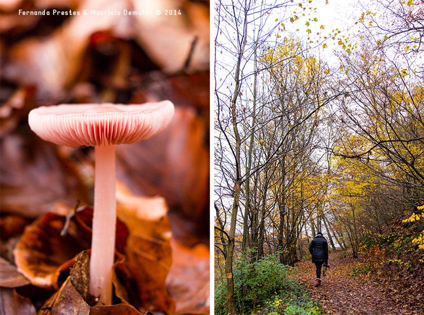 cogumelo e caminho