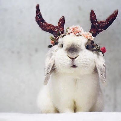 Bunny Antlers Content In A Cottage