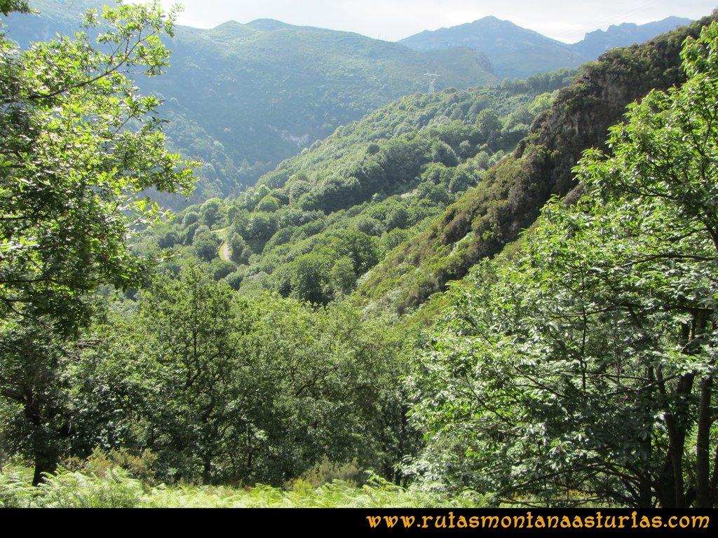 Ruta Cascadas Guanga, Castiello, el Oso: Vegetación en el valle del Trubia