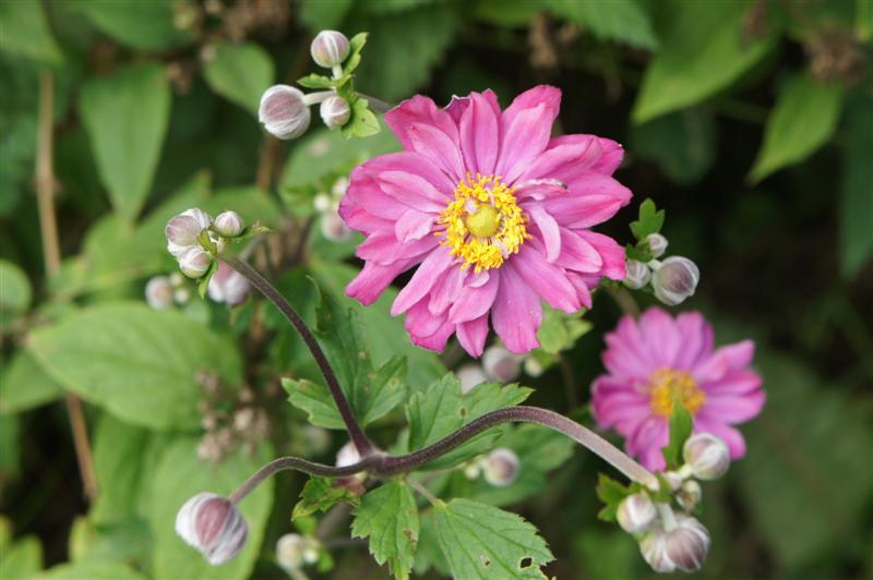 Fleurs D Aout Et Septembre Idee D Image De Fleur