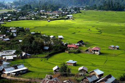 Ziro valley paddy fields