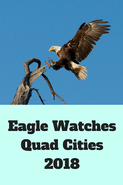Bald Eagle Watches Quad Cities 2018