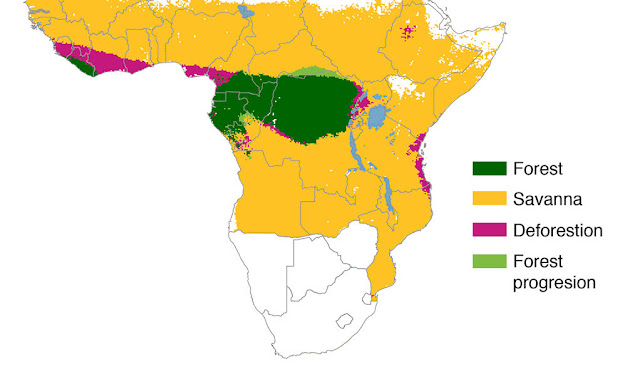 African deforestation not as great as feared