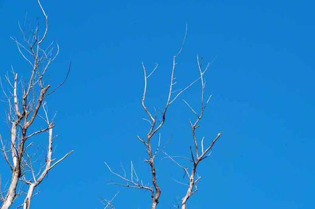 dead trees, sky, nature, Okinawa