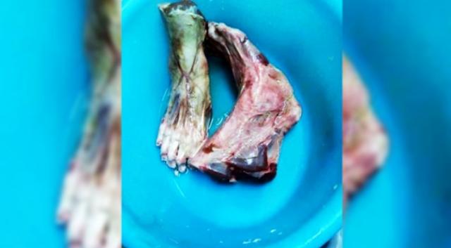 Hidangan Kaki Manusia Di Restoran Cina Gemparkan Netizen
