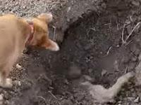 Memilukan, Anjing Kubur Sahabatnya Usai Ditabrak Mobil