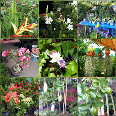 Vientiane Plant Sale