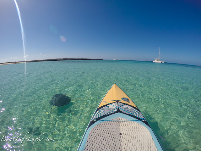 Paddling with a sting ray, Honeymoon Harbor, Bimini Islands