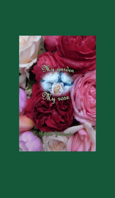 My garden, My rose_Rouge Pierre