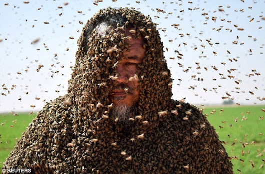 Man Tries To Cover Himself With 20,000 Bees In Attempt To Make It Into The Guinness Book Of Records