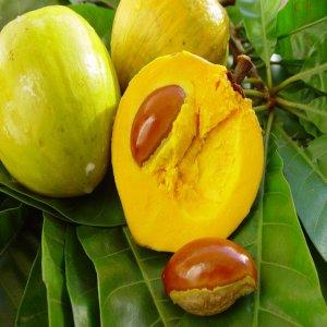 Manfaat buah canistel buat kesehatan