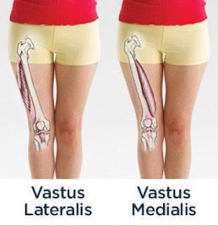 vastus medialis muscle, anatomy, muscle picture