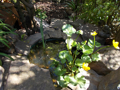 Wildlife pond with Marsh marigold Change your garden - what can you add this year? Green Fingered Blog