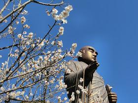 妙本寺の梅