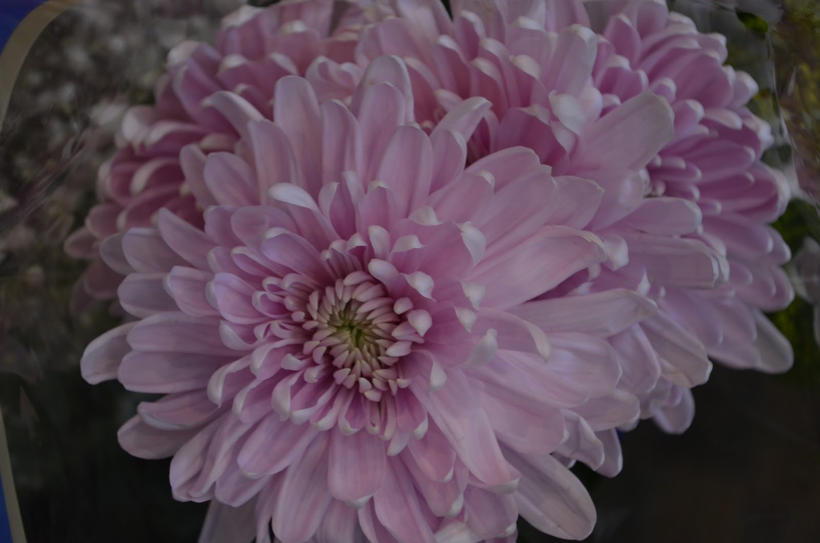 Long lasting flowers well there you have it some gorgeous long lasting blooms whether you buying some for yourself or as a gift theres nothing like fresh flowers in the reviewsmspy