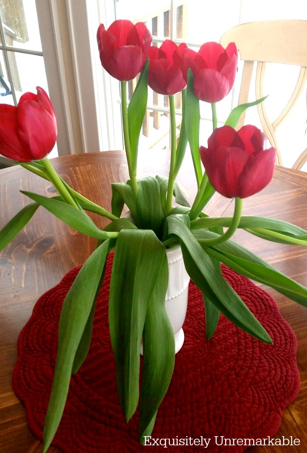 Revived Red Tulips