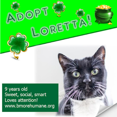 Loretta is a 9-yr-old black and white cat in need of a home