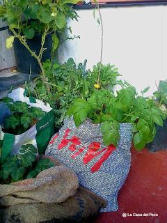 permacultura en cadiz
