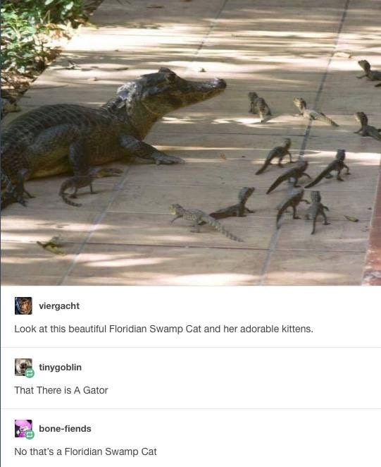 Florida Swamp Cat