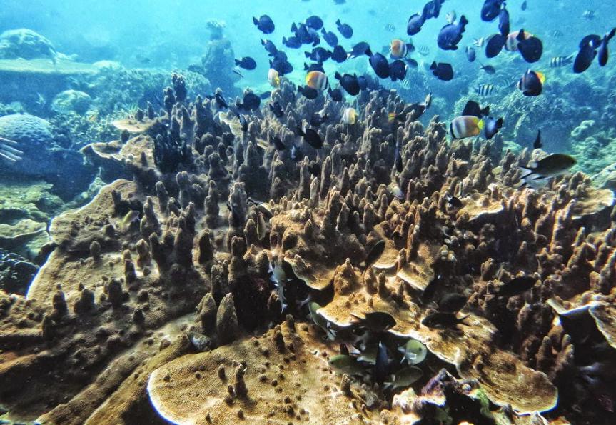 Objek Wisata Desa Pemuteran Bali