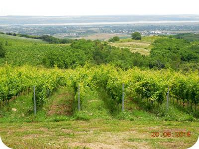domeniul viticol Dobrusa