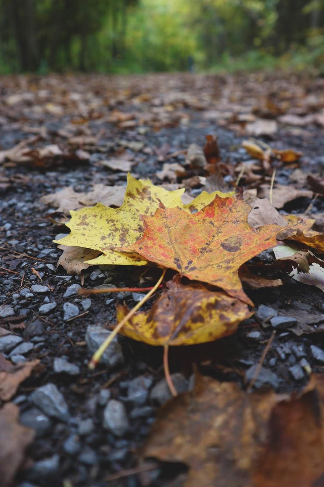 Being Grateful - Thanksgiving